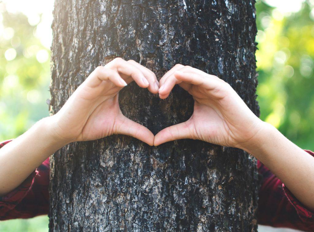 Tage des Baumes, Neuigkeiten vom Camping Liefrange